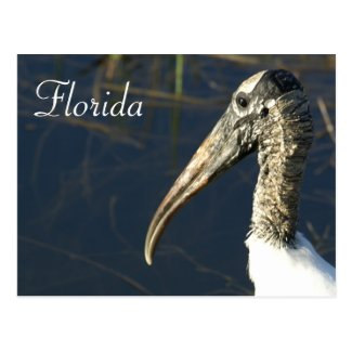 Florida Wood Stork Postcard
