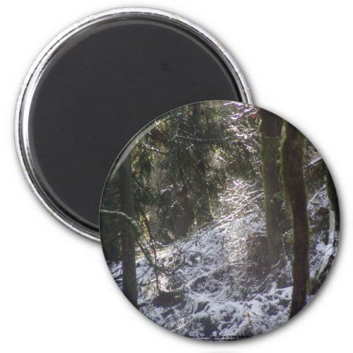 Forest Sun Rays in the Snow #24 magnet