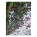 Forest Sun Rays in the Snow #33 print