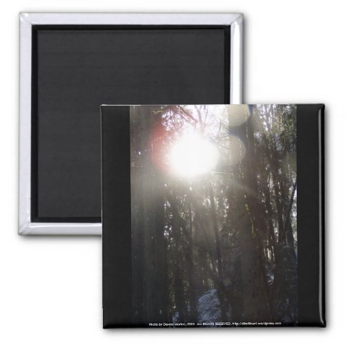 Forest Sun Rays in the Snow #50 magnet
