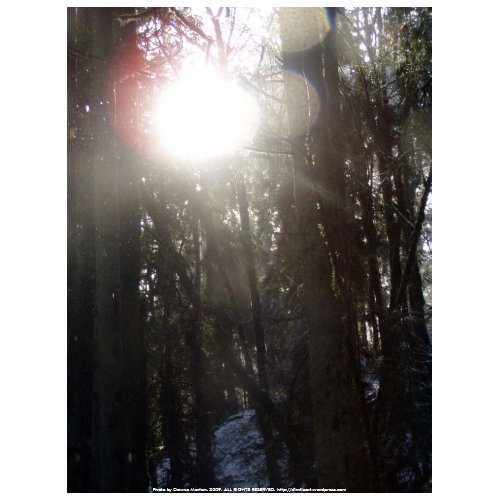 Forest Sun Rays in the Snow #50 shirt