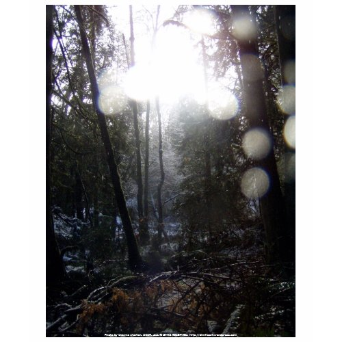 Forest Sun Rays in the Snow #64 shirt