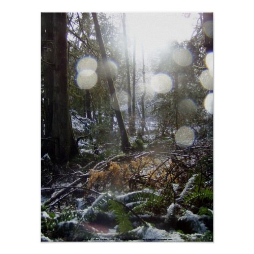 Forest Sun Rays in the Snow #68 print
