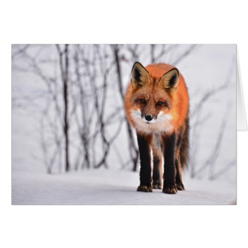 Fox Card - blank for all occasions - custom card