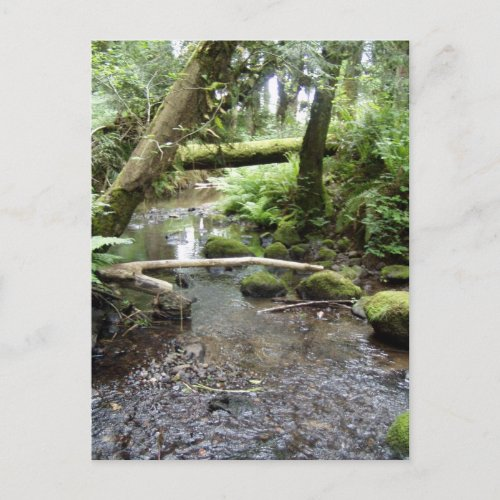 Fox Creek, Rainier, Oregon postcard