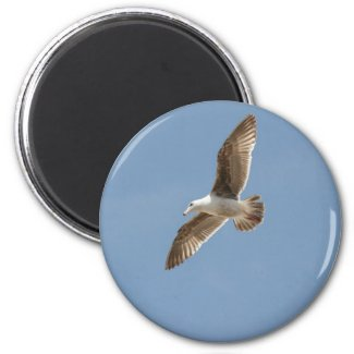 Free as a Bird (Flying Seagull) Refrigerator Magnets