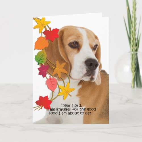 Funny Beagle Thanksgiving Card
