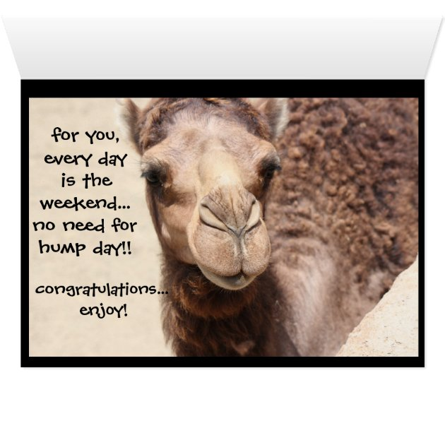 Funny Camel Hump Day Retirement Card Zazzle