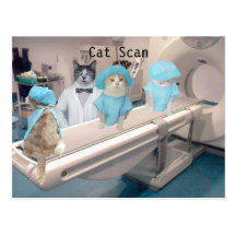 Funny Cat Scan Image Postcard