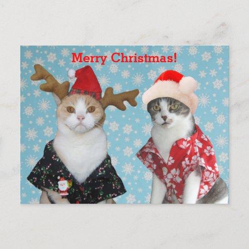 Funny Cats in Hawaiian Christmas Shirts Holiday Postcard
