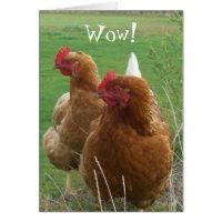 Funny Chicks Birthday Greeting Card