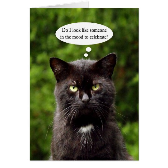 Funny Moody Black Cat Birthday Card Zazzle Com