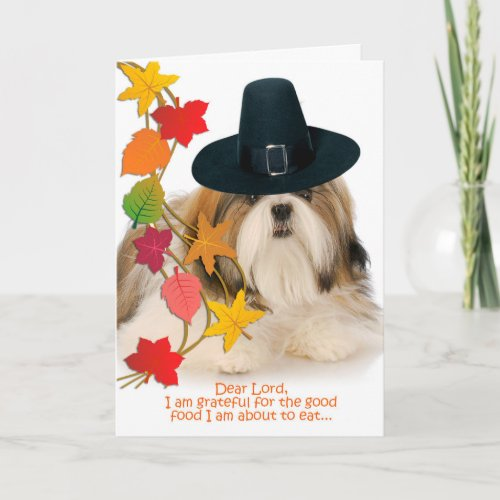 Funny Shih Tzu Thanksgiving Card