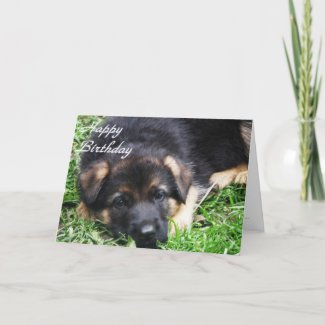 German Shepherd Puppy - Birthday card card