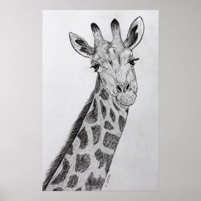 Giraffe Portrait Pencil Sketch Drawing Art Print