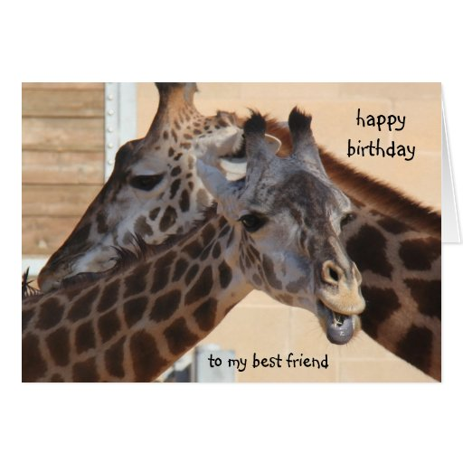 blank happy birthday cards