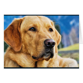 Golden Labrador Retriever Card