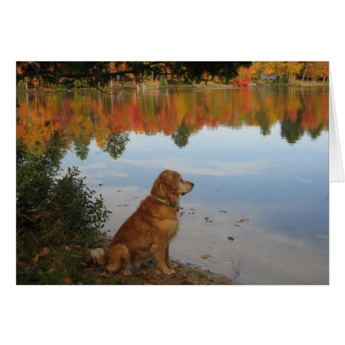 Golden Retriever Autumn at the Lake