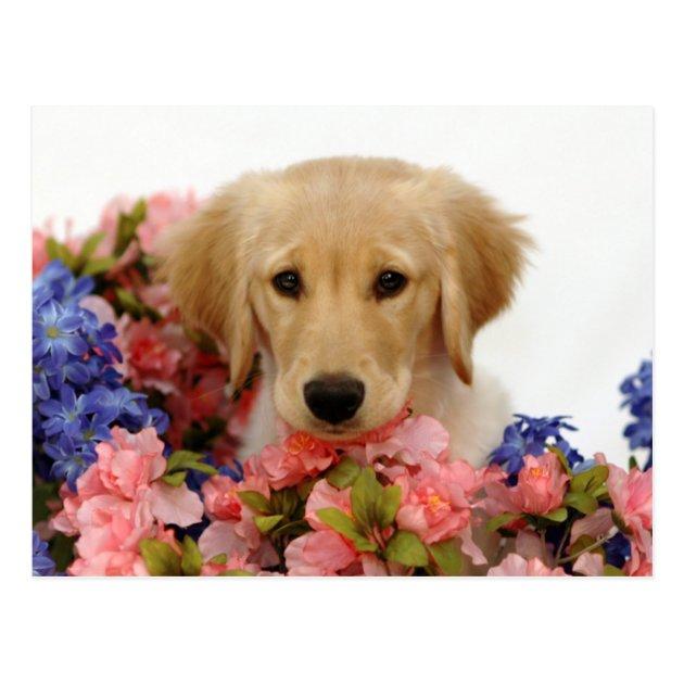 Golden Retriever Puppy And Flowers Postcard Zazzle