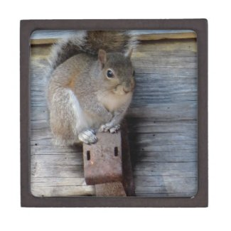 Gray Squirrel, Rural Photography by *Mom* Premium Trinket Box
