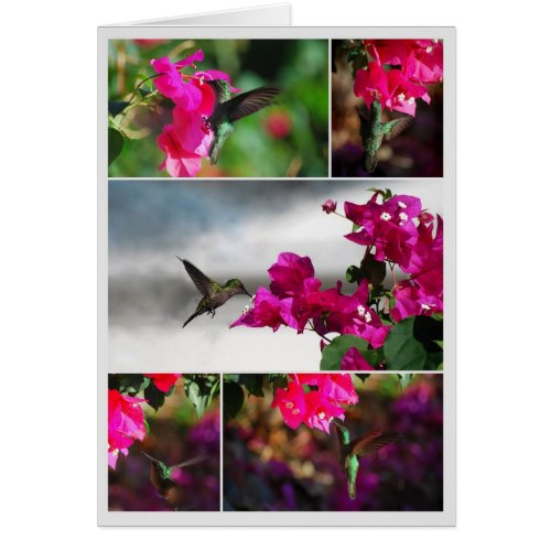 Green-throated Carib Hummingbird Collage card