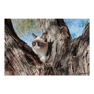 Grumpy Cat™ In a Tree Poster
