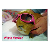 Guinea pig Birthday Card