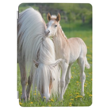 Haflinger Horses Cute Baby Foal With Mum Photo - iPad Air Cover