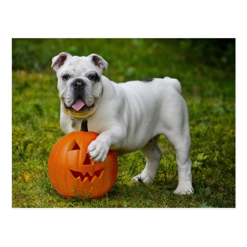 Halloween bulldog postcard