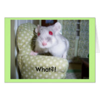 Hamster Belated Birthday Card