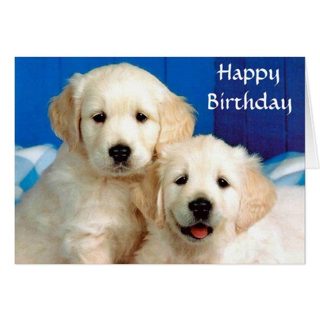 Happy Birthday Golden Retriever Puppies Card
