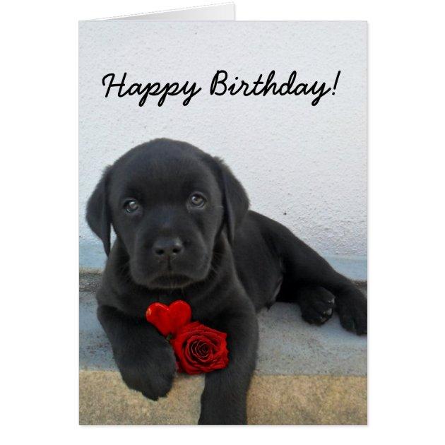 Happy Birthday Labrador Retriever Greeting Card
