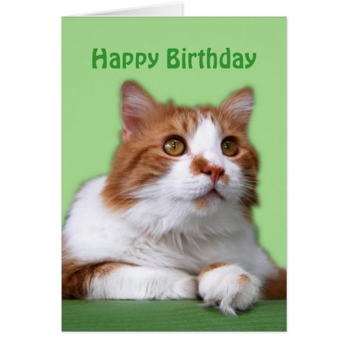 Happy Birthday Orange and White Thoughtful Cat Cards