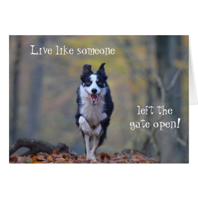 Happy Border Collie Dog Birthday Card Zazzle