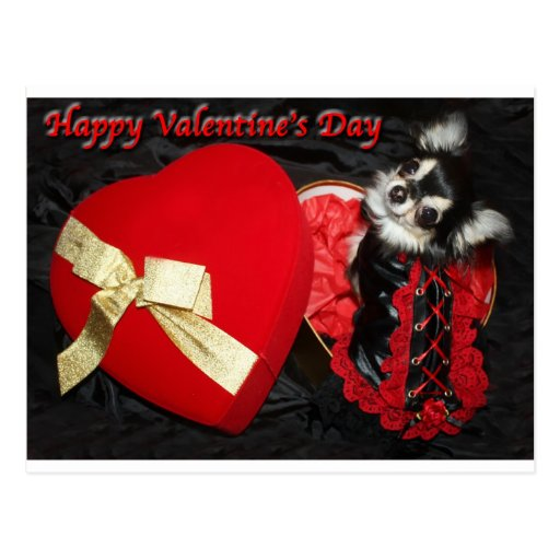 Happy Valentines Day Chihuahua Postcard Zazzle