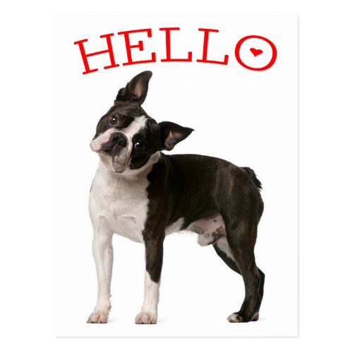 Hello Boston Terrier Puppy Dog Red Thinking of You Postcard