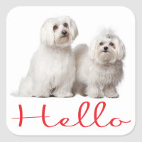 Hello White Maltese Puppy Dog Stickers Seal
