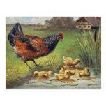 Hen & Chicks Postcard
