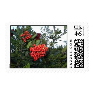 Holiday Postage Stamp: Red Cotoneaster Berries