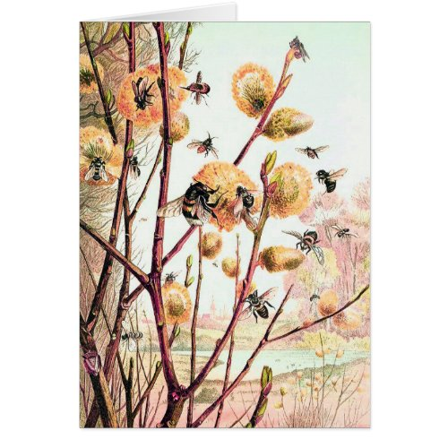 Honey bee old world illustration blank card