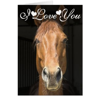 Horse Face Photograph I Love You Greeting Cards