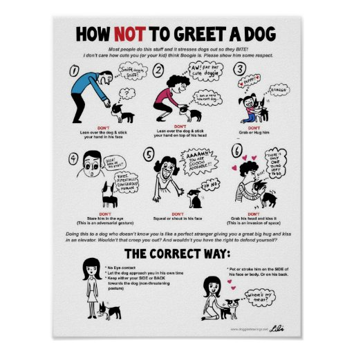 How Not To Greet A Dog (11