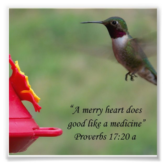 Hummingbird Proverbs 17 20 Bible Verse Photograph Zazzle Com