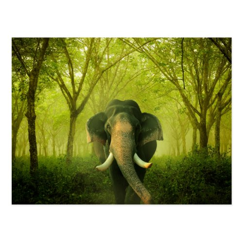 Indian Elephant Stunning Large Mammal Green Forest Postcard