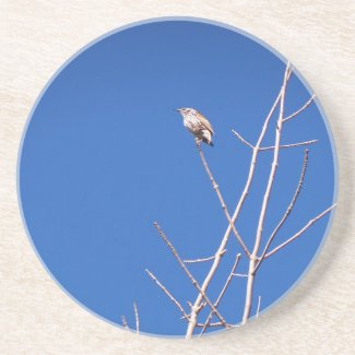 Infant Wood Thrush Coaster coaster