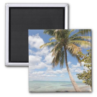 Isla Saona - Palm Tree at the Beach Fridge Magnets
