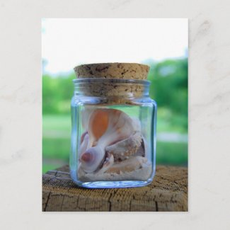 Jar of Sea Shells Postcard postcard