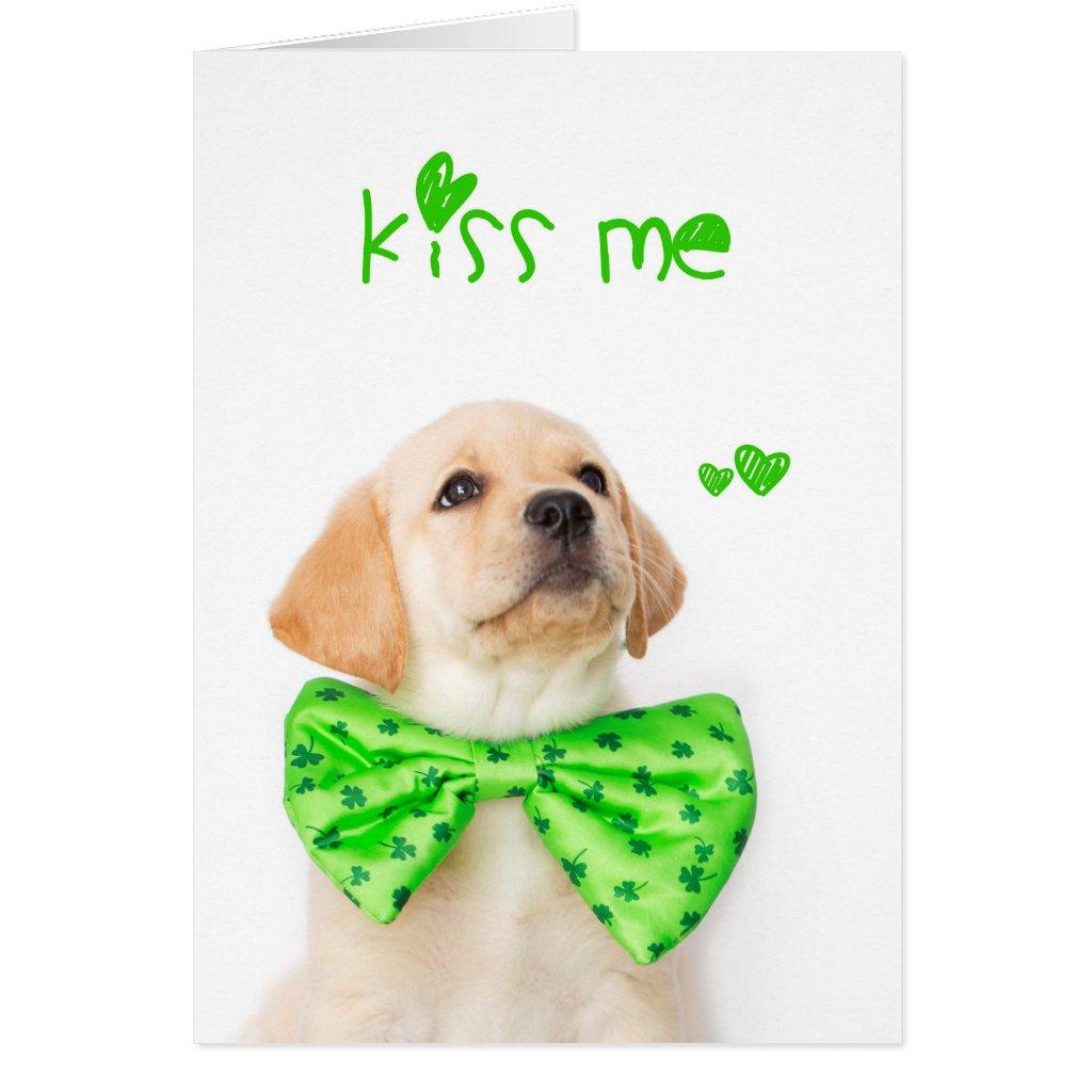 Kiss Me Yellow Labrador Puppy