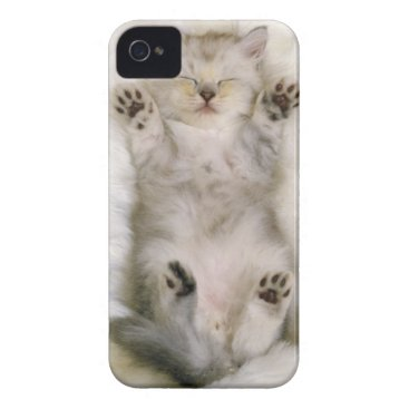 Kitten Sleeping on a White Fluffy Carpet, High iPhone 4 Case