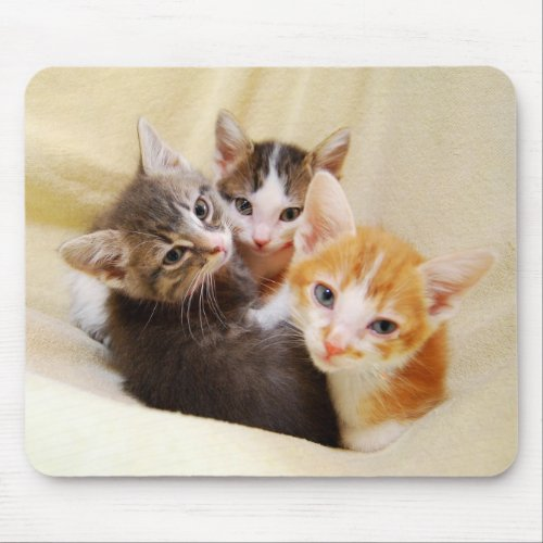 Kitten Trio Mousepad mousepad